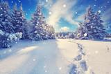 Fußspuren im Schnee im Winterwald - 178467509