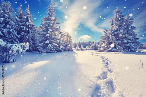 Foto op Plexiglas Weg in bos Fußspuren im Schnee im Winterwald