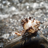 Shell, seashell on pebble. Defocused, blurry beach - 178483502