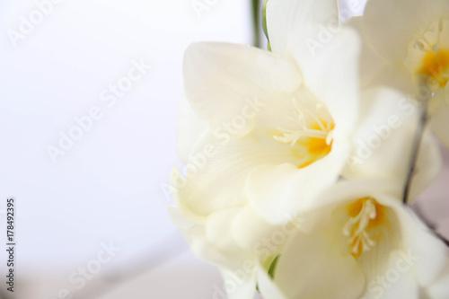 White Freesia Flowers Bouquet Buy Photos Ap Images Detailview