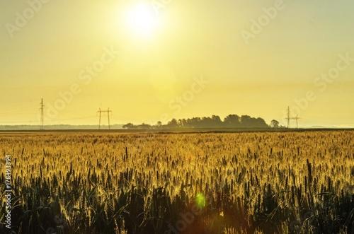 Fotobehang Meloen agriculture landscape