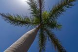 Palme von unten im Sonnenlicht - 178495930
