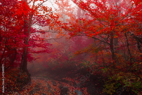 autumn forest 3