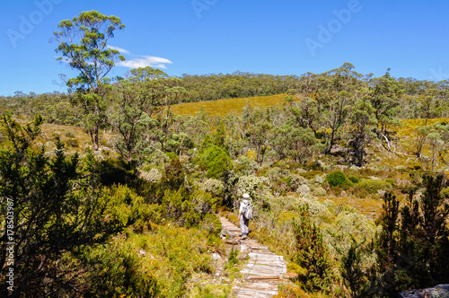 Fotobehang Betoverde Bos Dove Canyon and Enchanted Forest Walk is a scenic bushwalk in the Cradle Mountain Lake St Clair National Park - Tasmania, Australia