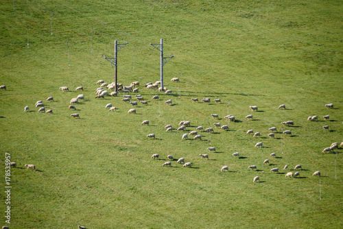 Foto op Plexiglas Pistache colorful countryside view in carpathians with sheep