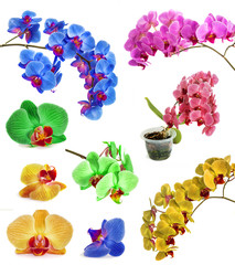 many different orchids isolate in one page.