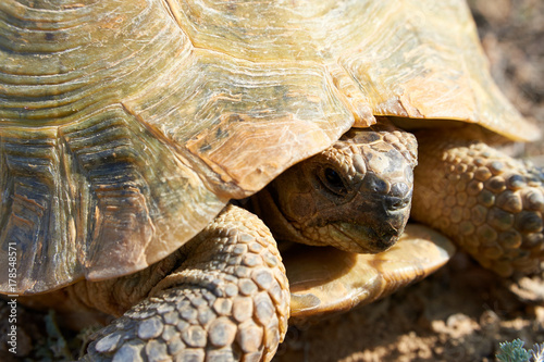 Aluminium Schildpad The desert tortoise. The desert tortoises live about 50 to 80 years; they grow slowly and generally have low reproductive rates. They spend most of their time in burrows, rock shelters, and pallets to