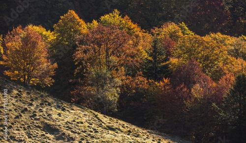 Fotobehang Grijze traf. Forêt d'automne