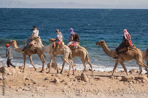 Fotobehang Kameel Egypt Sinai Desert