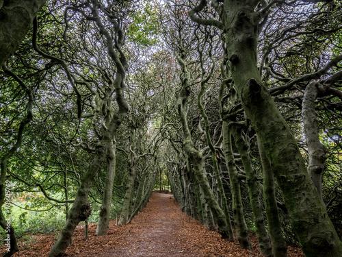 Papiers peints Route dans la forêt Veluwe, Netherlands