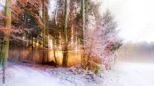 Aluminium Betoverde Bos Waldrand, Wiese und Weg im Winter im Gegenlicht
