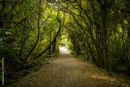 Papiers peints Route dans la forêt New Zealand Forest Path
