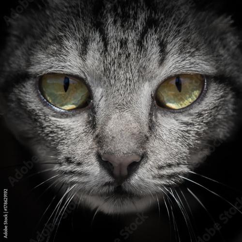 Obraz Look me in the eye