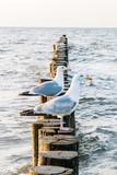zwei Möwen sitzen am Strand - 178636137