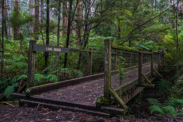 A wooden bridge in a rainforest, with a name sign Long Bridge