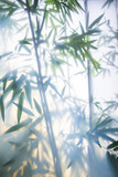 Green bamboo in the fog with stems and leaves behind frosted glass - 178645968