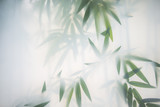 Green bamboo in the fog with stems and leaves behind frosted glass - 178646112