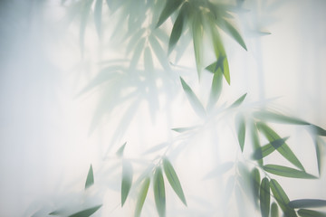 Green bamboo in the fog with stems and leaves behind frosted glass © Raman Maisei