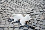 Cat lying on a cobblestone street