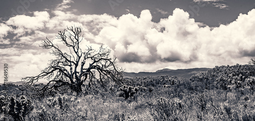 Fotobehang Grijs A blackened, scorched tree silhouetted against the clouds, rises above the recovering fynbos bushland after last year's fire. Cape Point, South Africa
