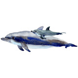 Dolphin wild mammals in a watercolor style isolated. Full name of the mammals: Dolphin. Aquarelle wild mammals for background, texture, wrapper pattern or tattoo. - 178653723
