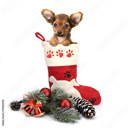 Poster puppy cute boots gifts christmas-tree decorations new year red-haired little whi