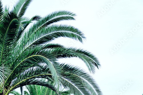 Abstract background with palm leaves. Empty copy space for text. - 178675147