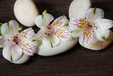Three white alstromeria flowers lie on stones for massage - 178675927