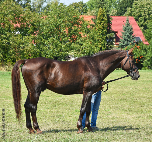 Young brown horse standing outdoor