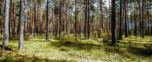 Fotobehang Natuur Beautiful wild forest