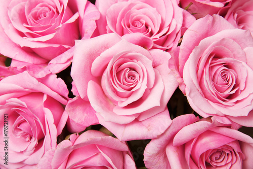 Fototapeta  Pink Roses Background