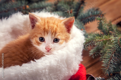 ginger kitten in santa hat against the background of a Christmas tree Poster