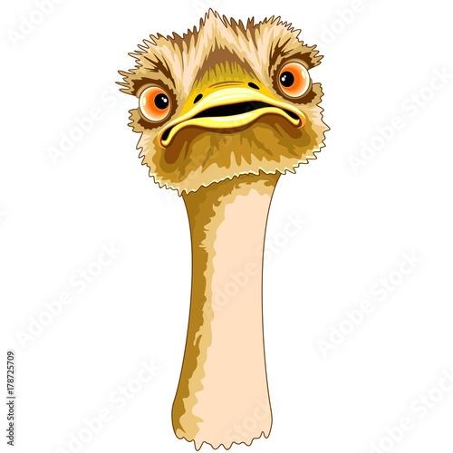 Deurstickers Draw Ostrich Portrait