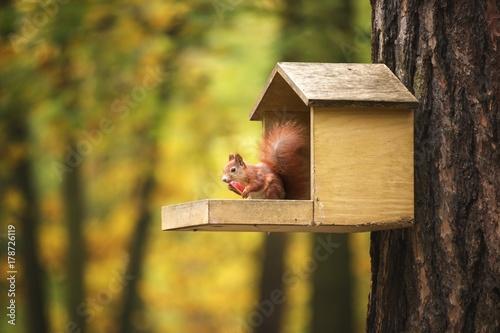 Tuinposter Eekhoorn Squirrel eat apple