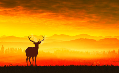 Silhouette of a deer on meadow during sunrise
