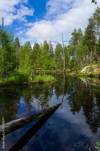 Papiers peints Rivière de la forêt Beautiful river in the wild forest