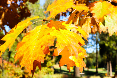 Fotobehang Oranje Close up View of Fall Colorful Leaves