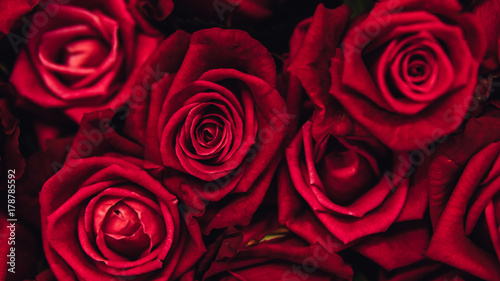 Fototapeta  .Red roses background close-up. hundreds of roses in a bouquet