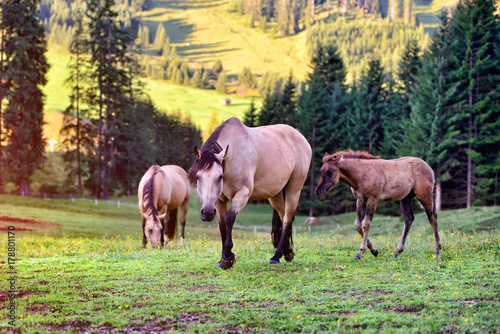 Fotobehang Zwavel geel Horses on the meadow in the mountains