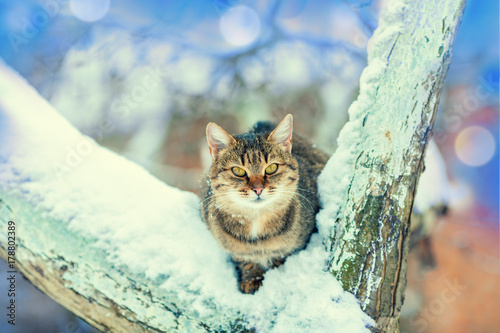 Cat sits on a snow-covered tree in winter Poster
