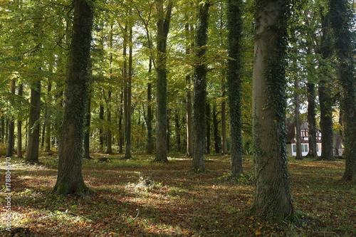 Fotobehang Betoverde Bos Der Wald im Herbst
