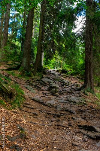 Fotobehang Weg in bos Steiniger Weg mit felsen im bayerischen wald
