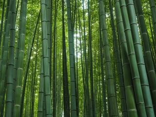 Bambus Wald Japan Kyoto