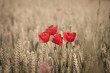 poppies and whea