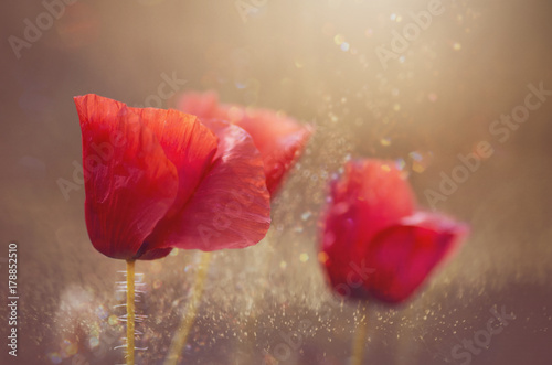 Foto op Plexiglas Klaprozen poppies