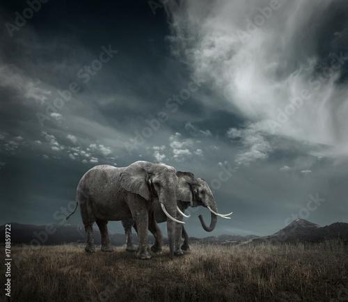 slon-z-pniami-i-duzymi-uszami-na-zewnatrz-pod-su