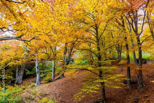Beautiful autumn forest 9 © andreymuravin