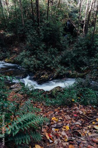 Papiers peints Rivière de la forêt October Adventure