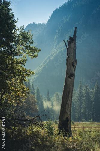 Fotobehang Groen blauw dead tree