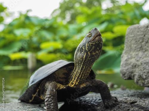 Fotobehang Schildpad Schildkröte Close Up